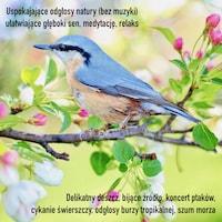 Uspokajające odgłosy natury (bez muzyki) ułatwiające głęboki sen, medytację, relaks
