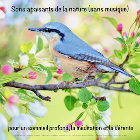 Sons apaisants de la nature (sans musique) pour un sommeil profond, la méditation et la détente