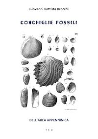Conchiglie fossili
