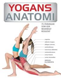 Yogans anatomi